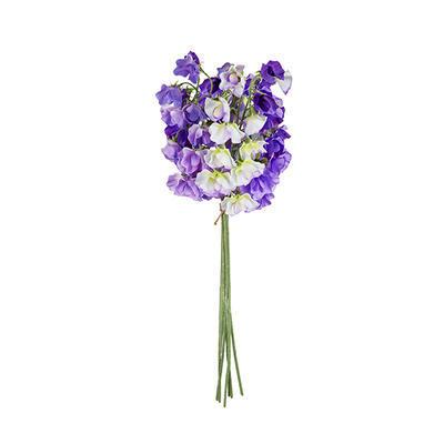 Květina HRACHOR VONNÝ svazek X6 H44 fialová, Sia