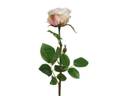 Růže, 66cm, krémová, Kaemingk