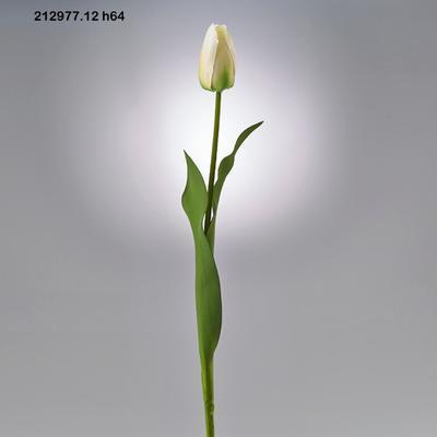 Květina TULIPÁN OLAND.REX RAMO 64 cm - krémový, EDG
