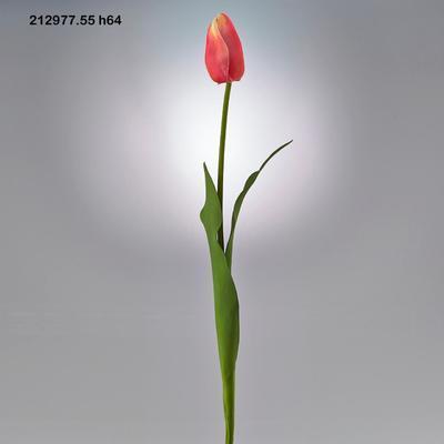 Květina TULIPÁN OLAND.REX RAMO 64 cm - růžový, EDG