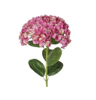 Květina HORTENZIE H69 tmavě růžová, Sia