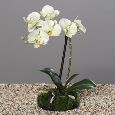Květina s balem ORCHIDEJ 30 cm - zelená/krémová, DPI