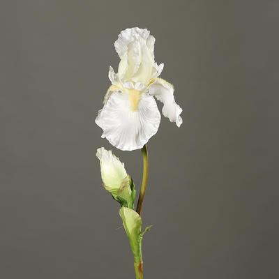 Květina IRIS 77 cm - krémová, DPI