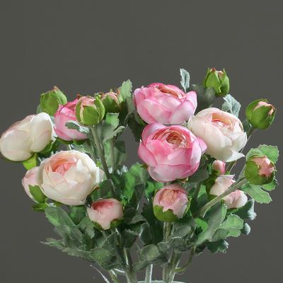 Rostlina RANUNCULUS 30 cm - růžová/krémová, DPI