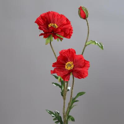 Rostlina VLČÍ MÁK 72 cm - červená, DPI