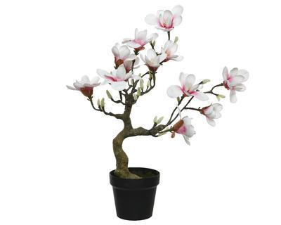 Magnolie v květináči, 60cm, světle růžová, Kaemingk