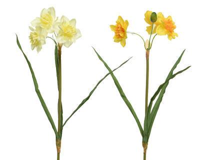 Narcis, 40cm, 2 druhy, Kaemingk