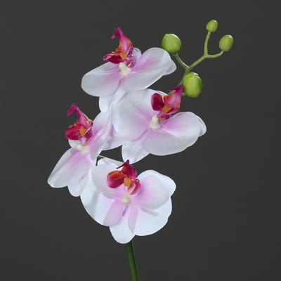 Květina stonek ORCHIDEJ PHALAENOPSIS 46 cm - růžová/krémová, DPI