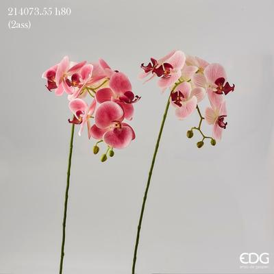 Květina ORCHIDEJ PHALAENOPSIS CHIC 80 cm - růžová, EDG