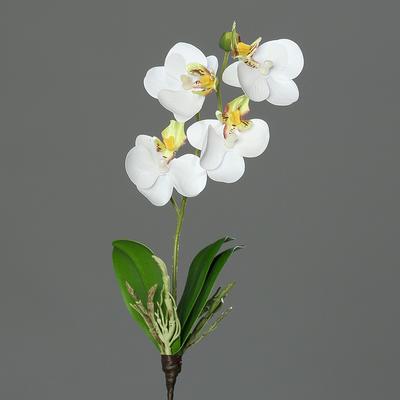 Květina MINI ORCHIDEJ PHALAENOPSIS 26 cm - zelená/bílá, DPI