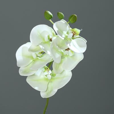 Květina ORCHIDEJ PHALAENOPSIS 37 cm - zelená/krémová, DPI