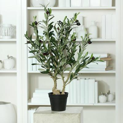 Rostlina v květináči - OLIVOVNÍK 68 cm, DPI