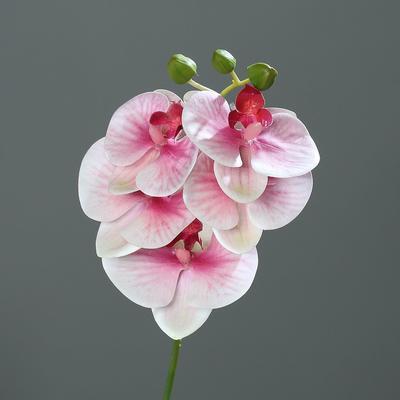 Květina ORCHIDEJ PHALAENOPSIS 37 cm - růžová/krémová, DPI