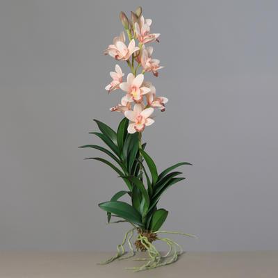Květina s kořeny ORCHIDEJ CYMBIDIEN 66 cm - lososová/růžová, DPI