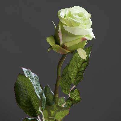 Květina RŮŽE BRAZIL 55 cm - zelená, DPI