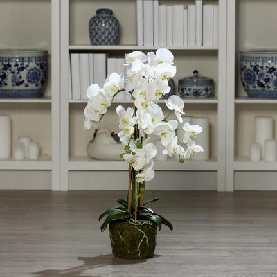 Květina s balem ORCHIDEJ 74 cm - zelená/krémová, DPI