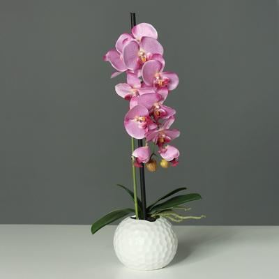 Květina v květináči - koule bílá ORCHIDEJ PHALAENOPSIS 46 cm - růžová, DPI