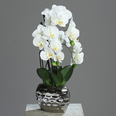 Květina v květináči - ovál stříbrný ORCHIDEJ PHALAENOPSIS 50 cm - krémová, DPI