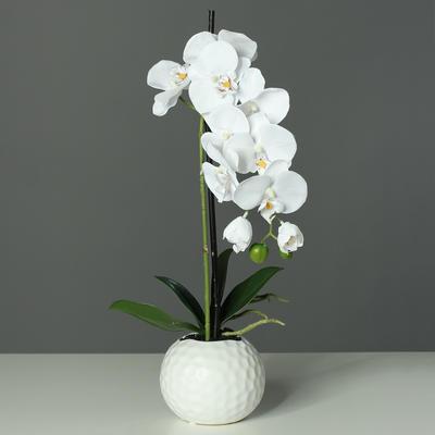 Květina v květináči - koule bílá ORCHIDEJ PHALAENOPSIS 46 cm - bílá, DPI