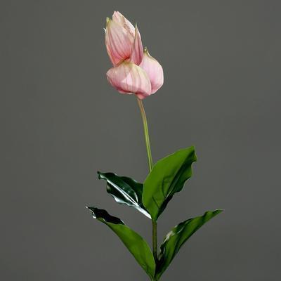 Rostlina MEDINILLA 73 cm - růžová/krémová, DPI