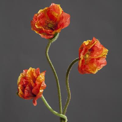 Květina VLČÍ MÁKY 72 cm - oranžová, DPI