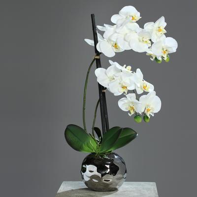Květina v květináči - koule stříbrná ORCHIDEJ PHALAENOPSIS 50 cm - krémová, DPI