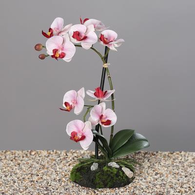 Květina s balem ORCHIDEJ 31 cm - růžová/krémová, DPI