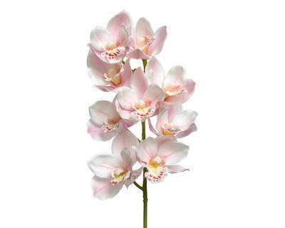 Orchidej, 71cm, světle růžová, Kaemingk