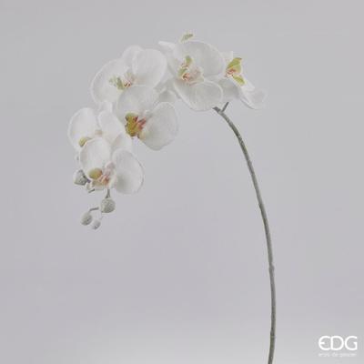 Květina ORCHIDEJ PHALAENOPSIS INNEVATA 72 cm - bílá, EDG