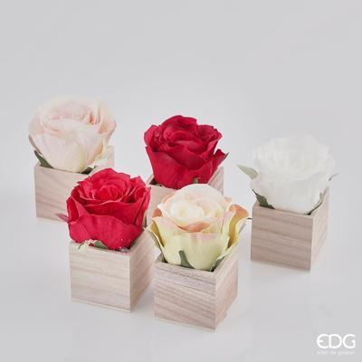 Růže v boxu CASSETTA ROSA - různé, EDG