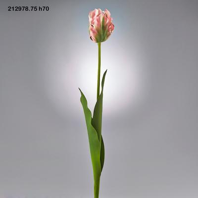 Květina TULIPÁN PARROT REX RAMO 70 cm - zelený/růžový, EDG