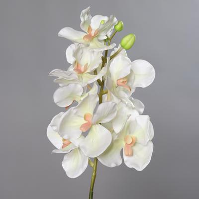 Květina stonek ORCHIDEJ VANDA 74 cm - krémová/zelená, DPI