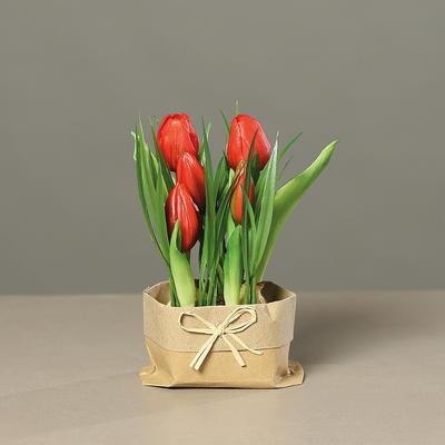 Květiny v obale TULIPÁNY 19 cm - červená, DPI