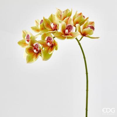 Květina ORCHIDEJ PHALAENOPSIS CYMB.CHIC RAMO 70 cm - sv. zelená, EDG