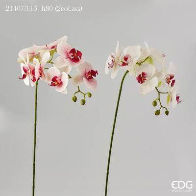 Květina ORCHIDEJ PHALAENOPSIS CHIC 80 cm - bílá/růžová, EDG
