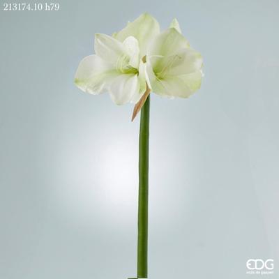 Květina AMARYLLIS DUKE RAMO 79 cm - bílá, EDG
