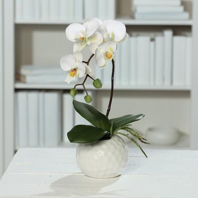 Květina v květináči - koule bílá ORCHIDEJ PHALAENOPSIS 33 cm - krémová/zelená, DPI