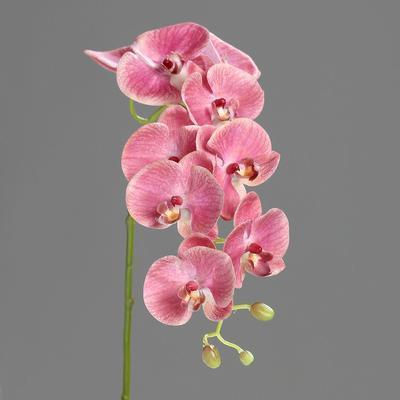 Květina stonek ORCHIDEJ PHALAENOPSIS 74 cm - tmavě růžová, DPI