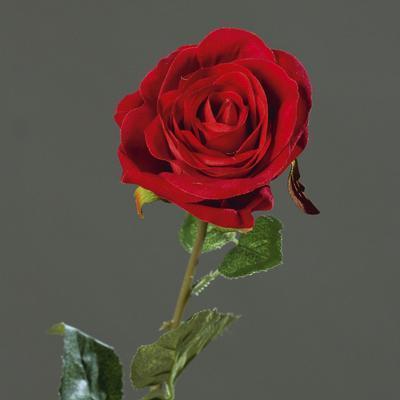 Květina RŮŽE SAMET 61 cm - červená, DPI