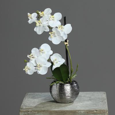 Květina v květináči - stříbrný ORCHIDEJ PHALAENOPSIS 30 cm - krémová, DPI