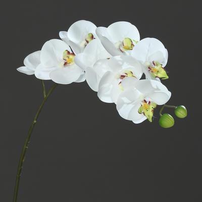 Květina stonek ORCHIDEJ PHALAENOPSIS 80 cm - bílá/zelená, DPI