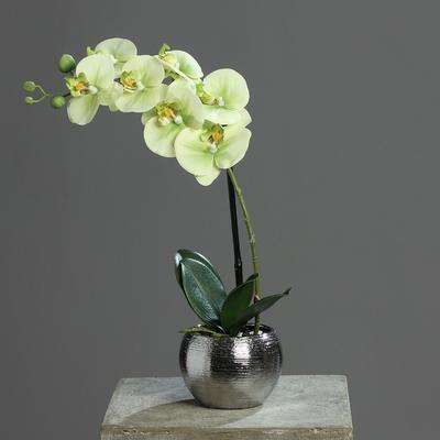 Květina v květináči - stříbrný ORCHIDEJ PHALAENOPSIS 40 cm - zelená/krémová, DPI
