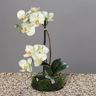 Květina s balem ORCHIDEJ 31 cm - zelená/krémová, DPI