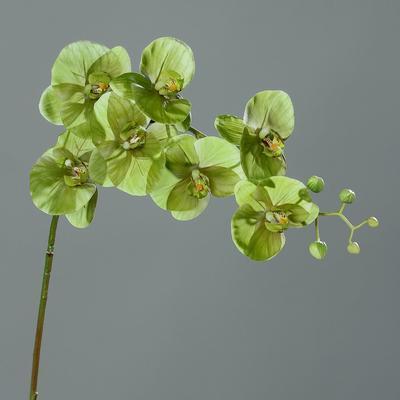 Květina ORCHIDEJ 118 cm - zelená, DPI