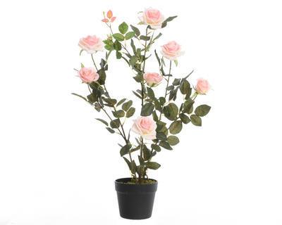 Růžový keř v květináči, 80cm, světle růžová, Kaemingk