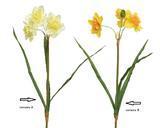 Narcis, 40cm, 2 druhy, Kaemingk - 2/2